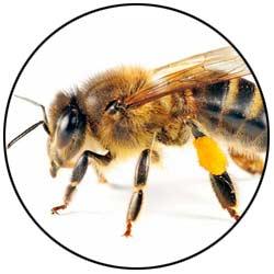 Stinging Pest Control