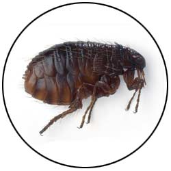 Pest Control Seattle Wa Insect Exterminator Stop