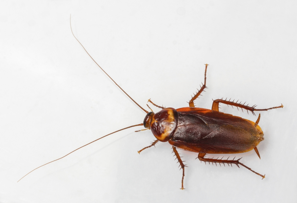 American Roach Extermination