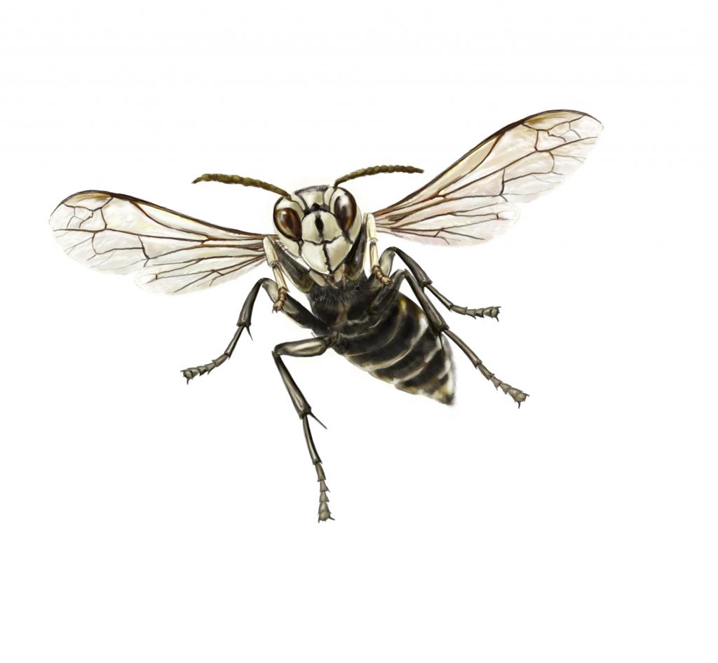 Bald Faced Hornet Extermination Service