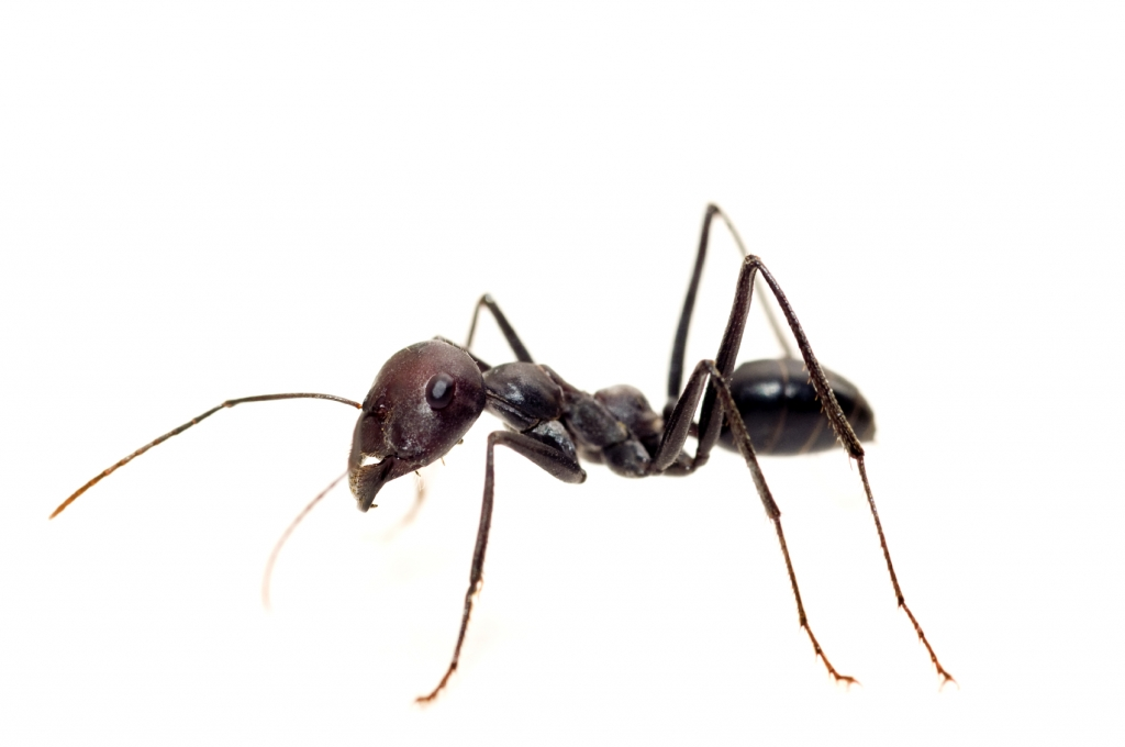 how to avoid ants in house