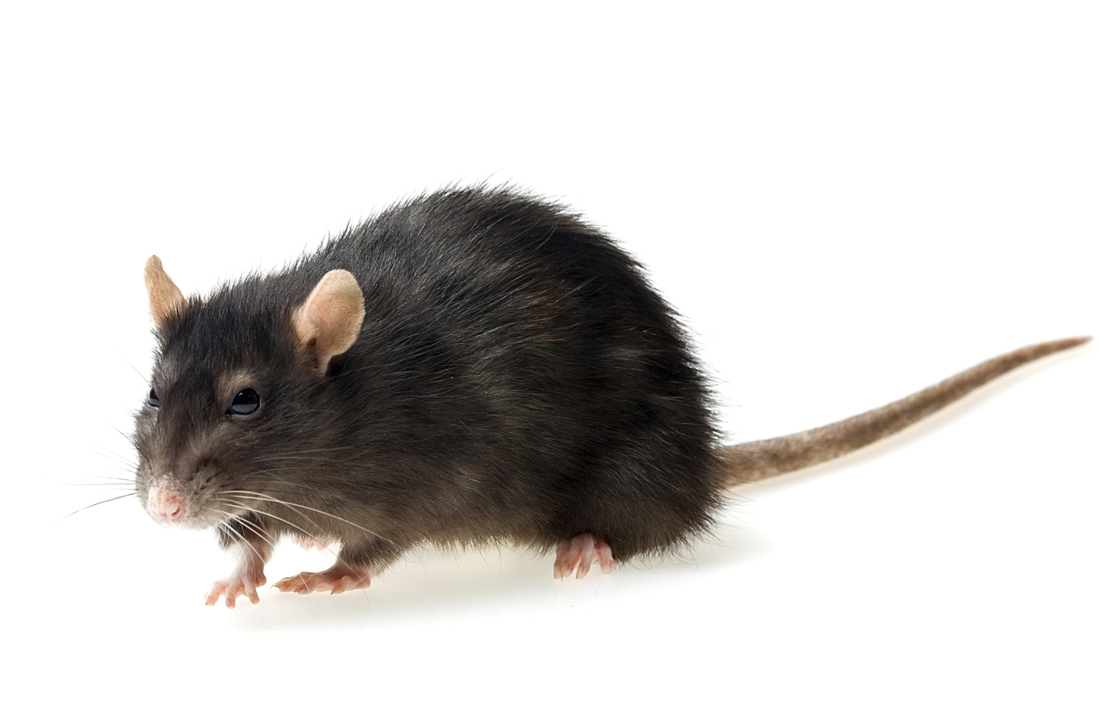 Image Result For Stop Bugging Me Pest Control