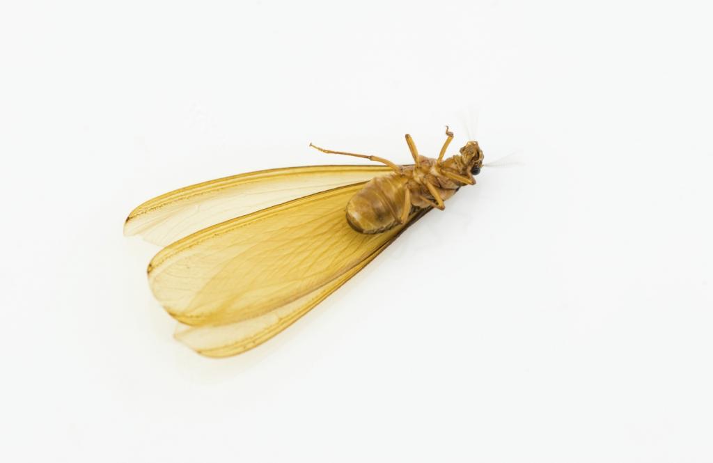 Termite Pest Control Seattle Termite Exterminator Seattle Stop Bugging Me