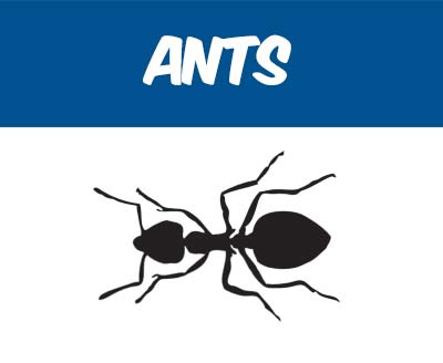 Ant Removal and Pest Control