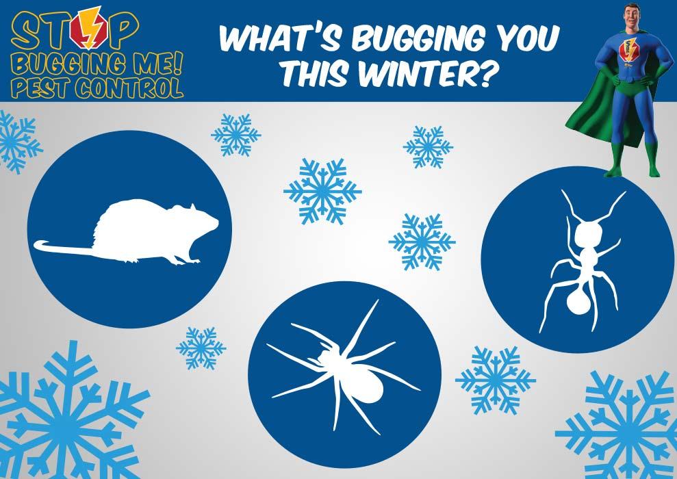 Stop Bugging Me Pest Control - Winter Pests