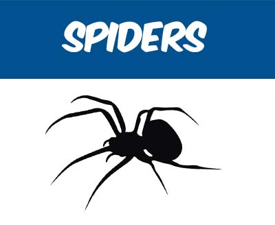 Spider Removal Pest Control